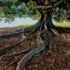 Voyage au cœur de la terre : nos sols en danger